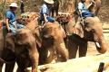 Chiang Mai, sloni při práci