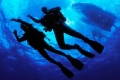 scubadiving.jpg